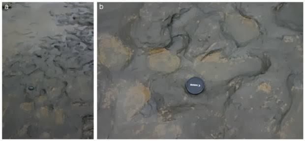 Zbulohen gjurmët njerzore  800 mijë vjecare në Angli 13021-1051