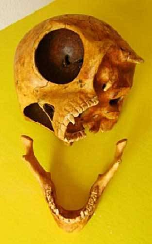 9820-ancient_skull_1