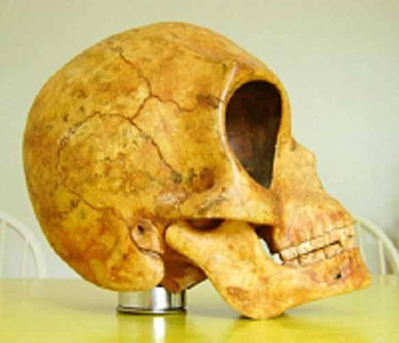 9820-ancient_skull_2
