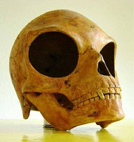 9820-ancient_skull_3